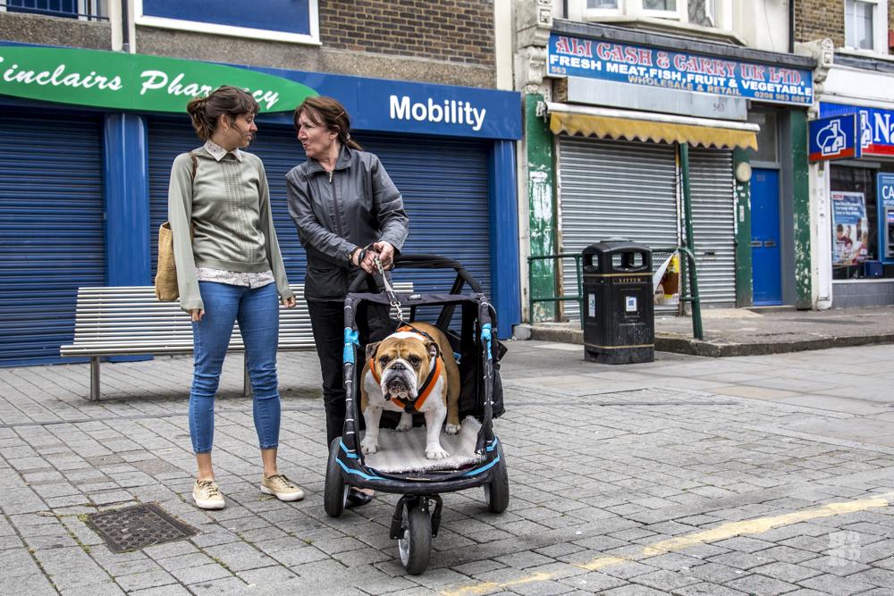 British bulldog in a pram on an East London high street