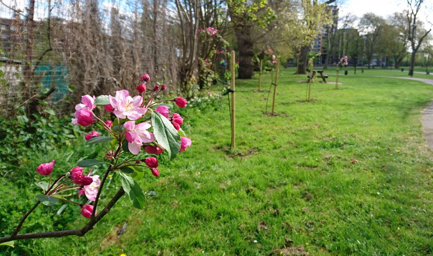 The Friends of Meath Gardens, saving our green spaces one tree at a time