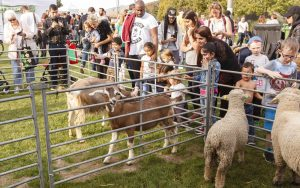 Young visitors to Harvest Stomp pet goats and sheep