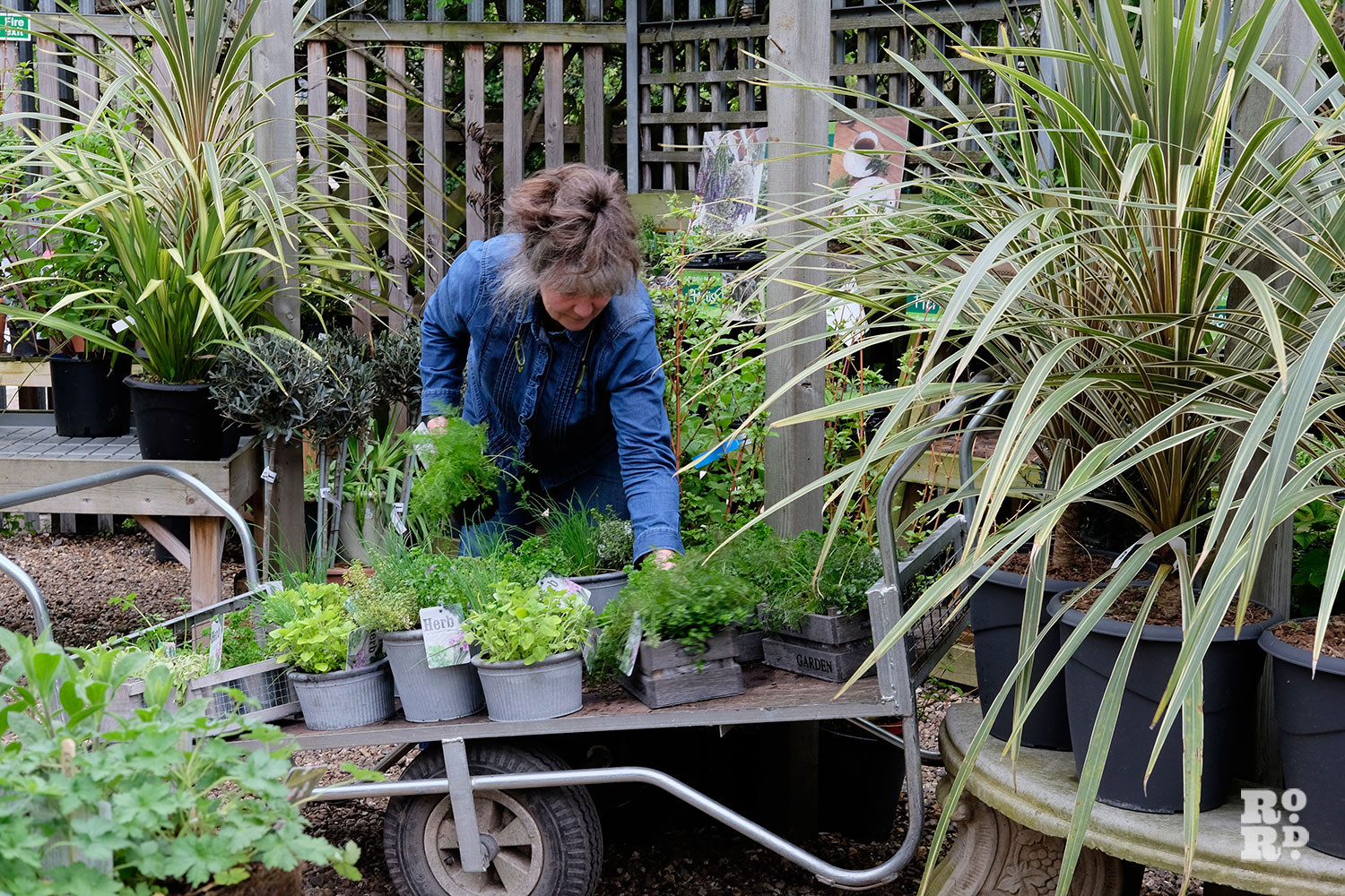 Female employee at Growing Concerns, a gardening centre in Victoria Park, East London, leaning over to choose plants