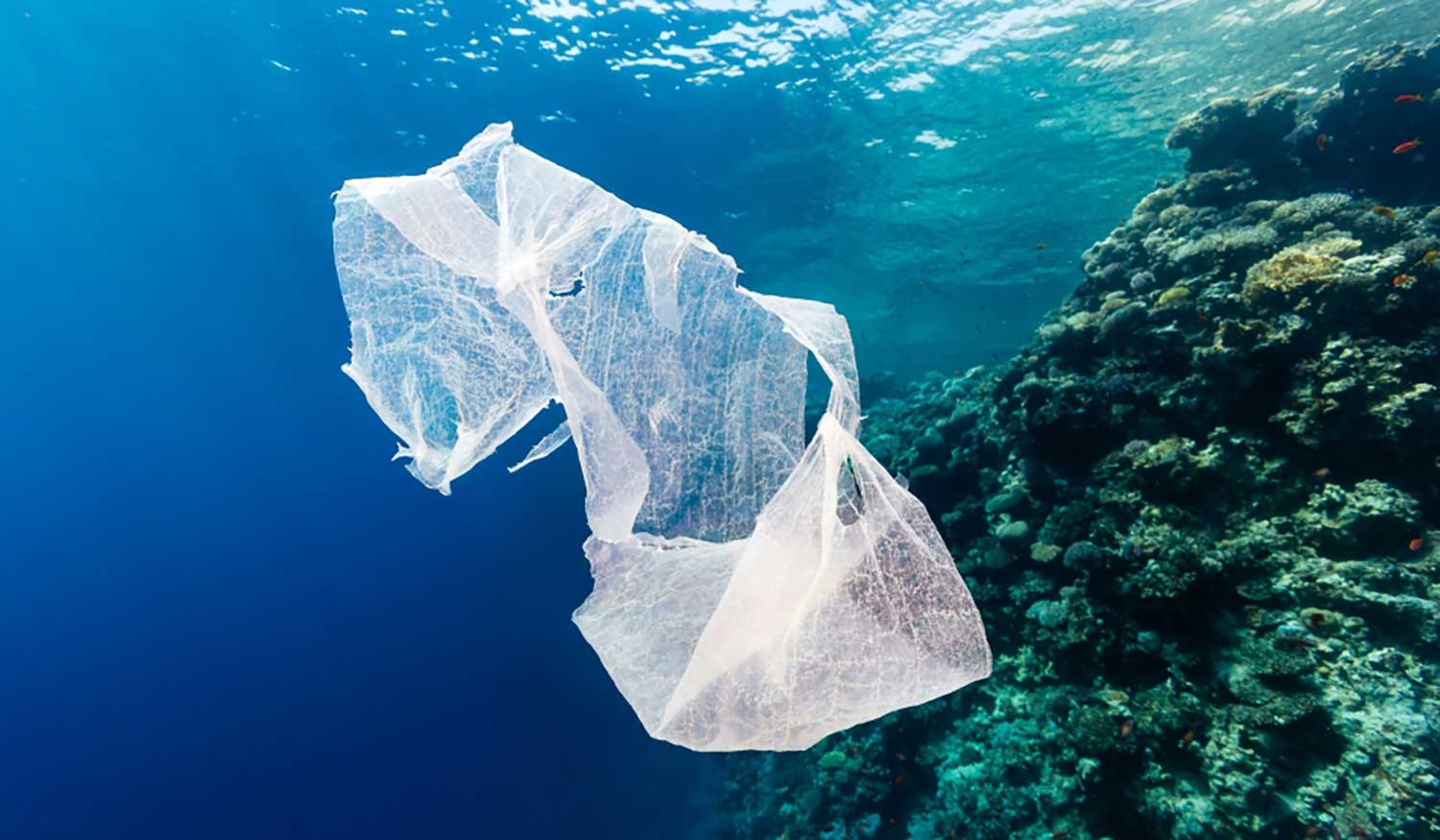 Plastic bag floating in sea.