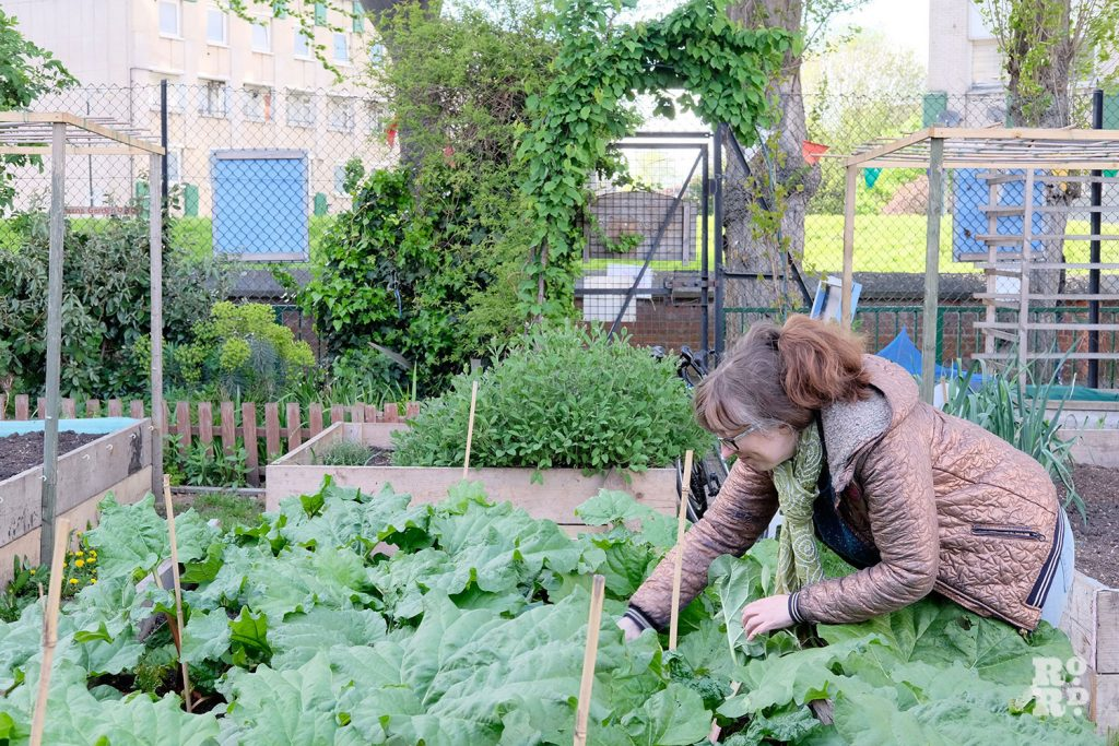 Lizzy Mace at Cranbrook Community Food Garden