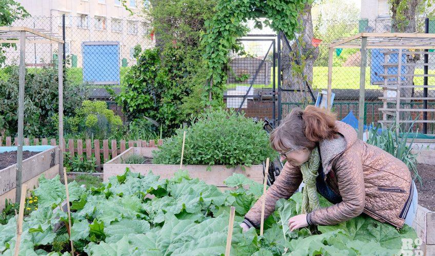 Lizzy Mace at Cranbrook Community Food Garden