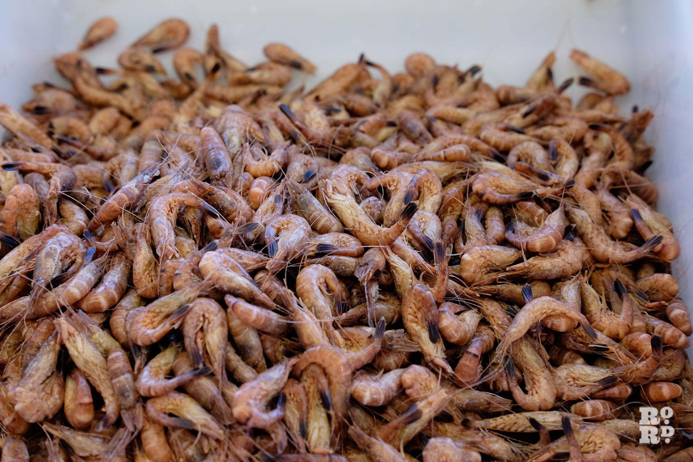 Small prawns