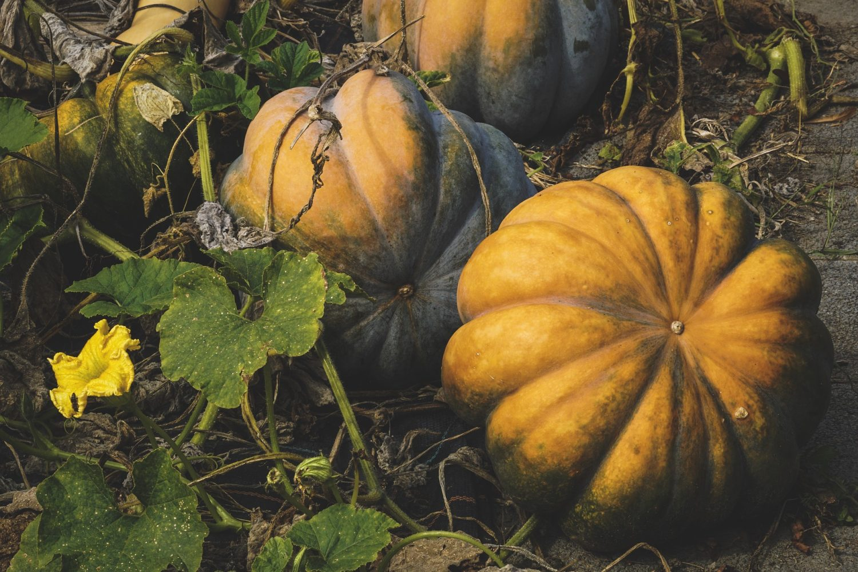 Top ten Halloween events in the East End