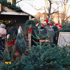 Pines and Needles pop up Christmas tree market