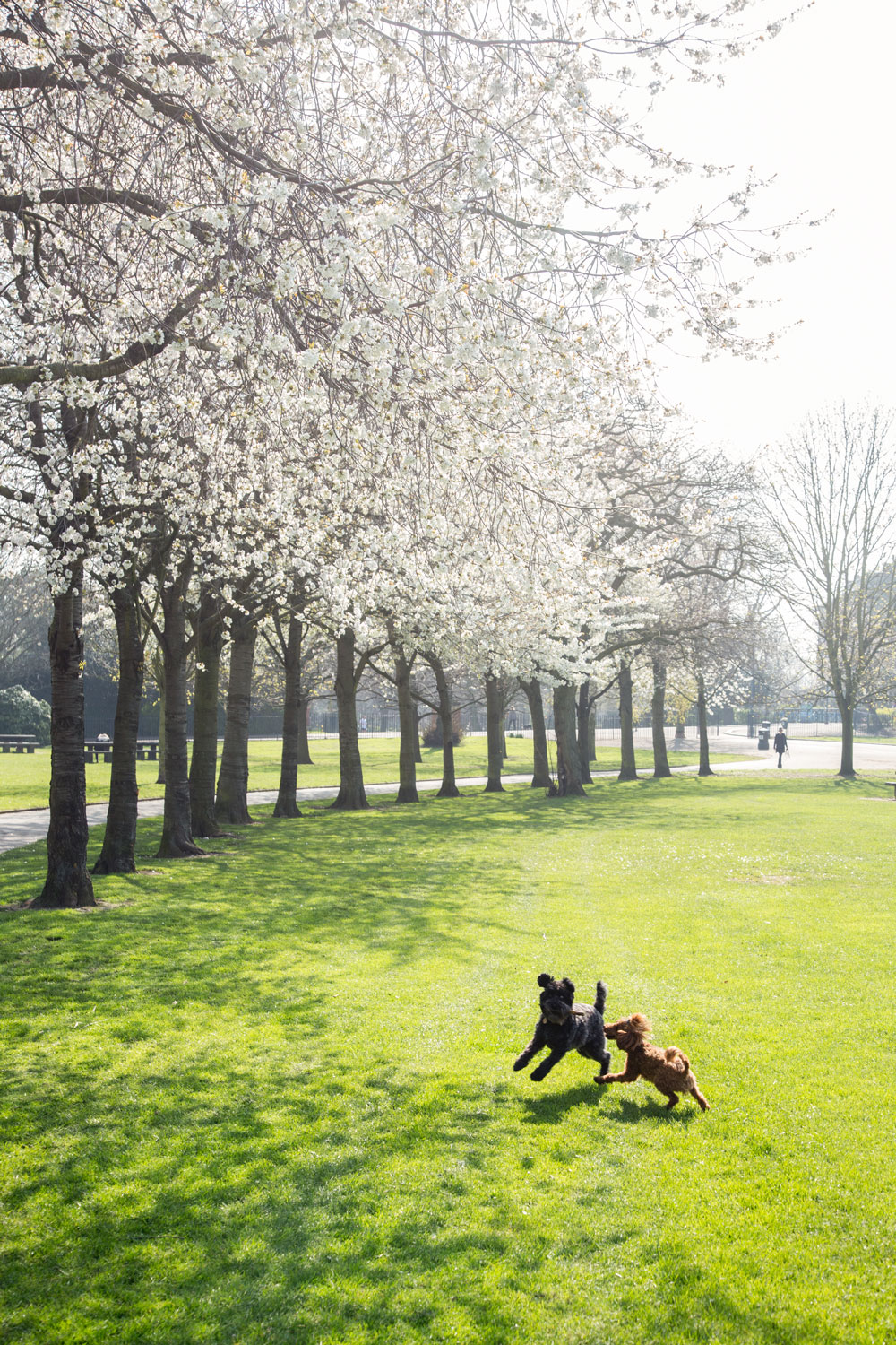 Victoria Park, no. 33 in An Opinionated Guide to East London © Charlotte Schreiber