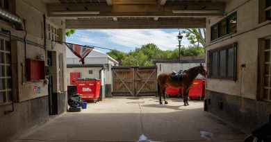 Hay, horseshoes, and Trooping the Colour: a morning at Bow Police Stables