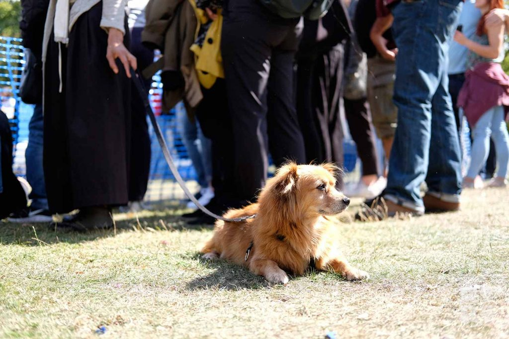 Dog laying down at the Victoria Park Dog Show