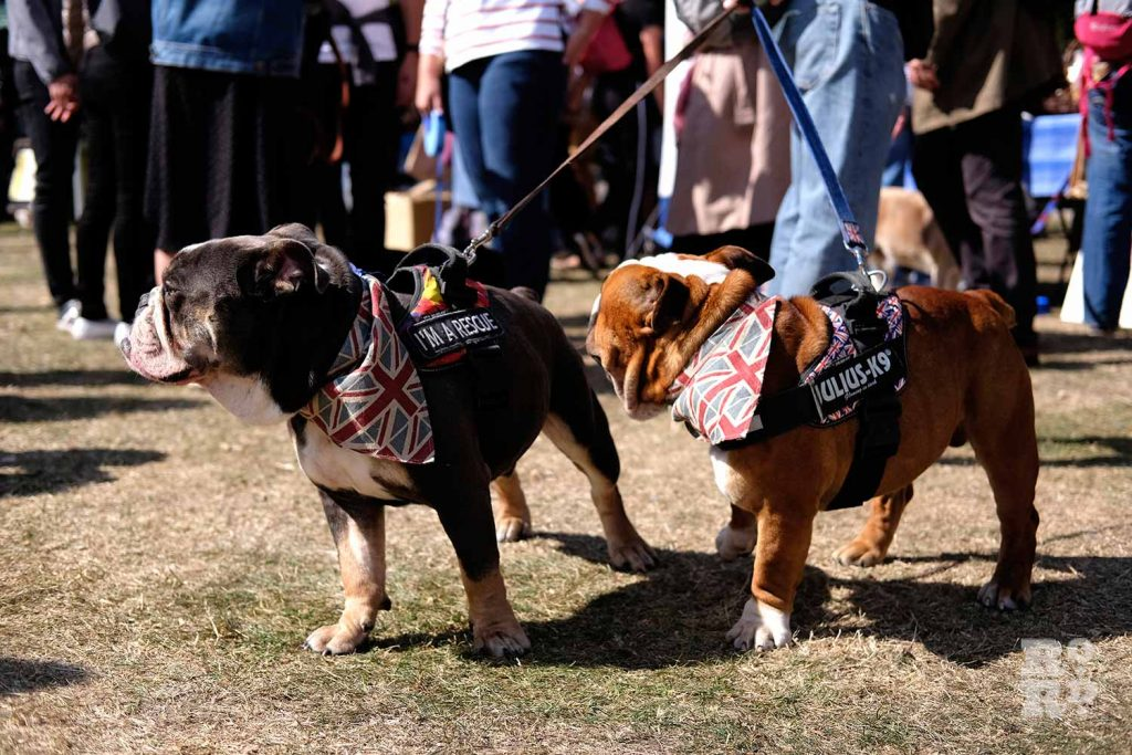 Two dogs wearing Union Jack bandanas at the Victoria Park Dog Show