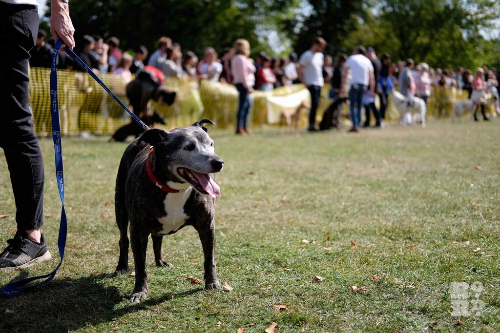 Happy dog at the Victoria Park Dog Show