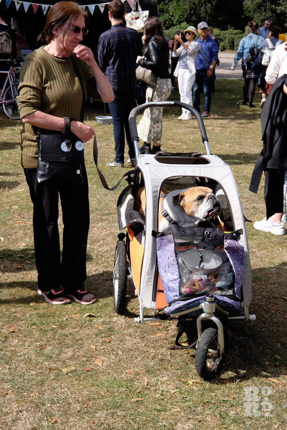 Dog in a pram at the Victoria Park Dog Show
