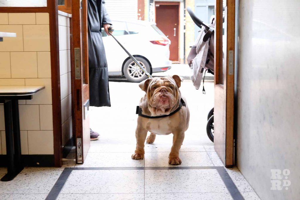 G.Kelly pie and mash Roman Road bulldog entering shop
