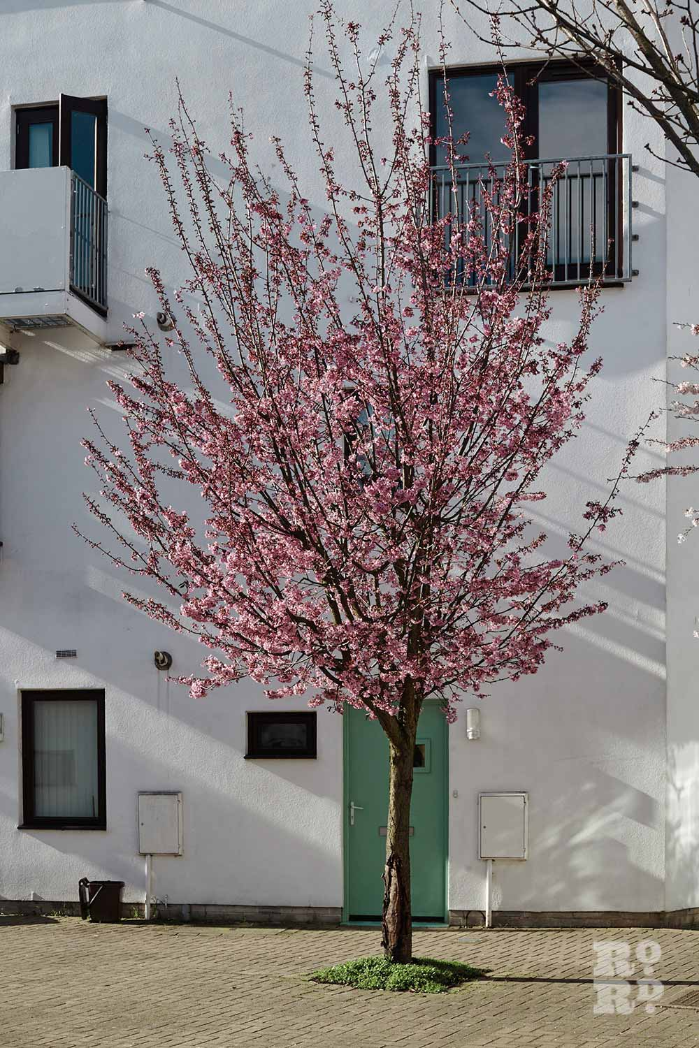 Cherry tree outside turquoise front door, Donnybrook Quarter, Bow, East London (photos by Yev Kazannik)