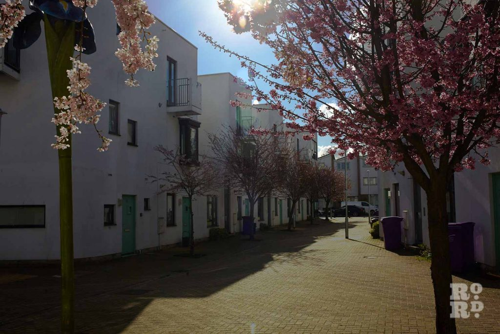 Sun through cherry tree, Donnybrook Quarter, Bow, East London (photos by Yev Kazannik)