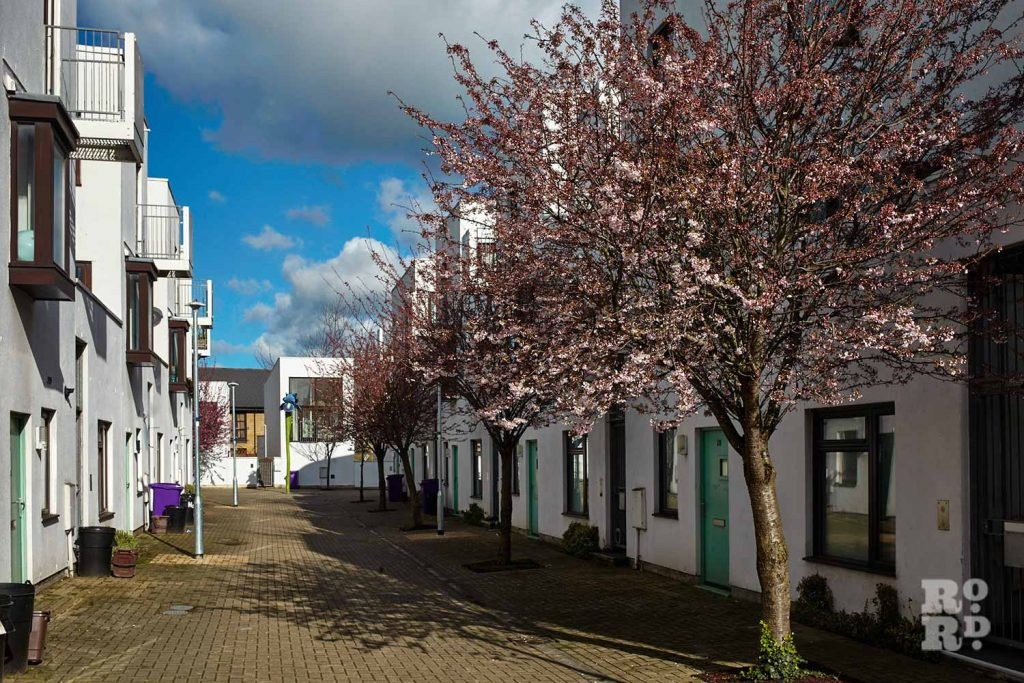 Avenue of cherry trees, Donnybrook Quarter, Bow, East London (photos by Yev Kazannik)