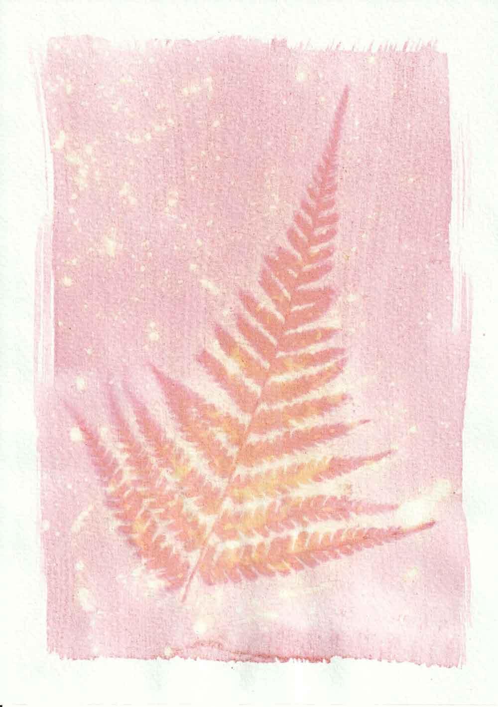 Braken anthotype prints by Tim Boddy