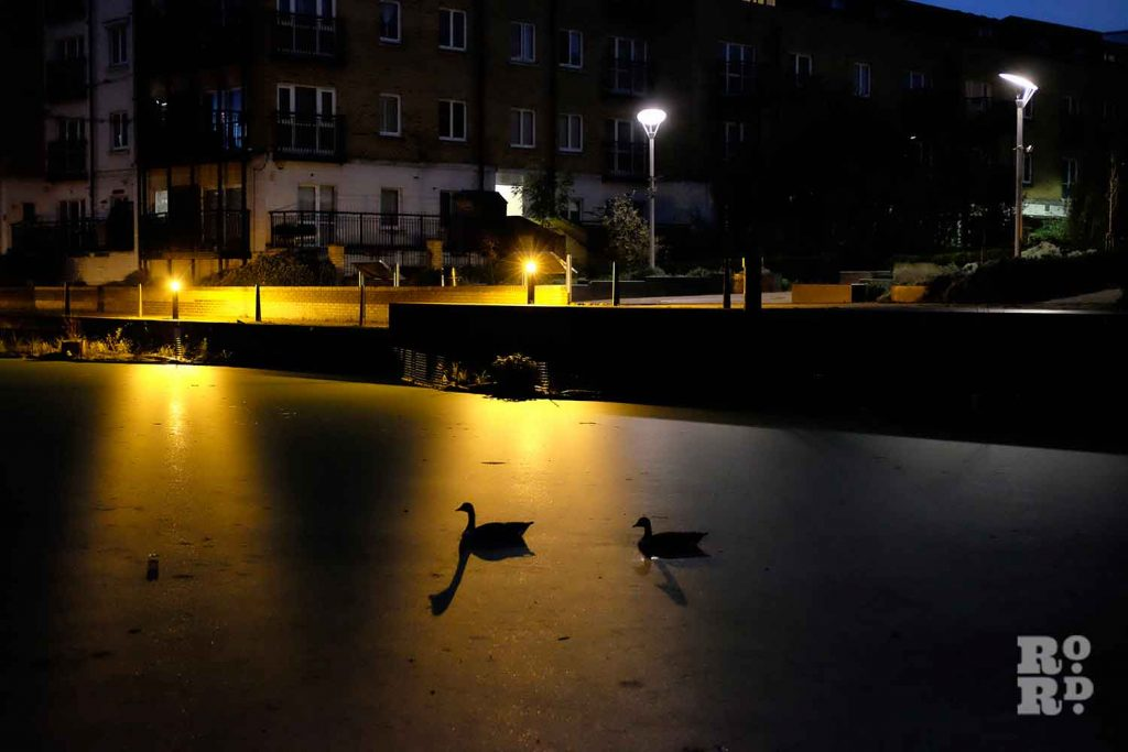 Two ducks glide across the water