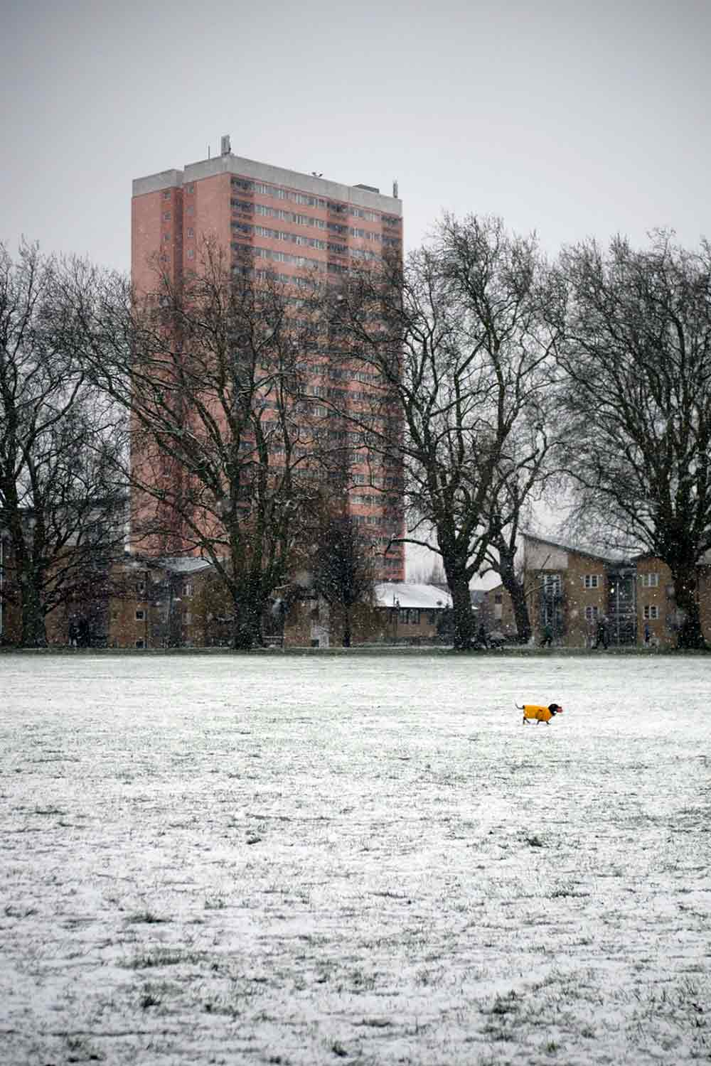 Pink tower block, Clare House, seen from snowy Victoria Park in 2021