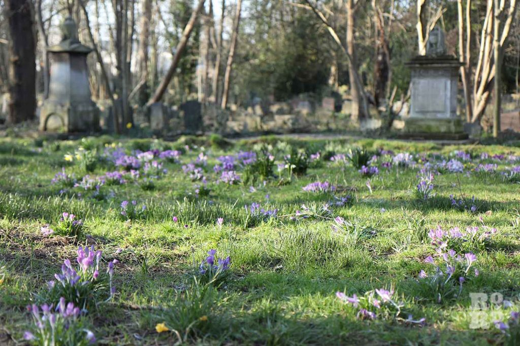 Crocuses, Tower Hamlets Cemetery Park, spring flowers, 2021