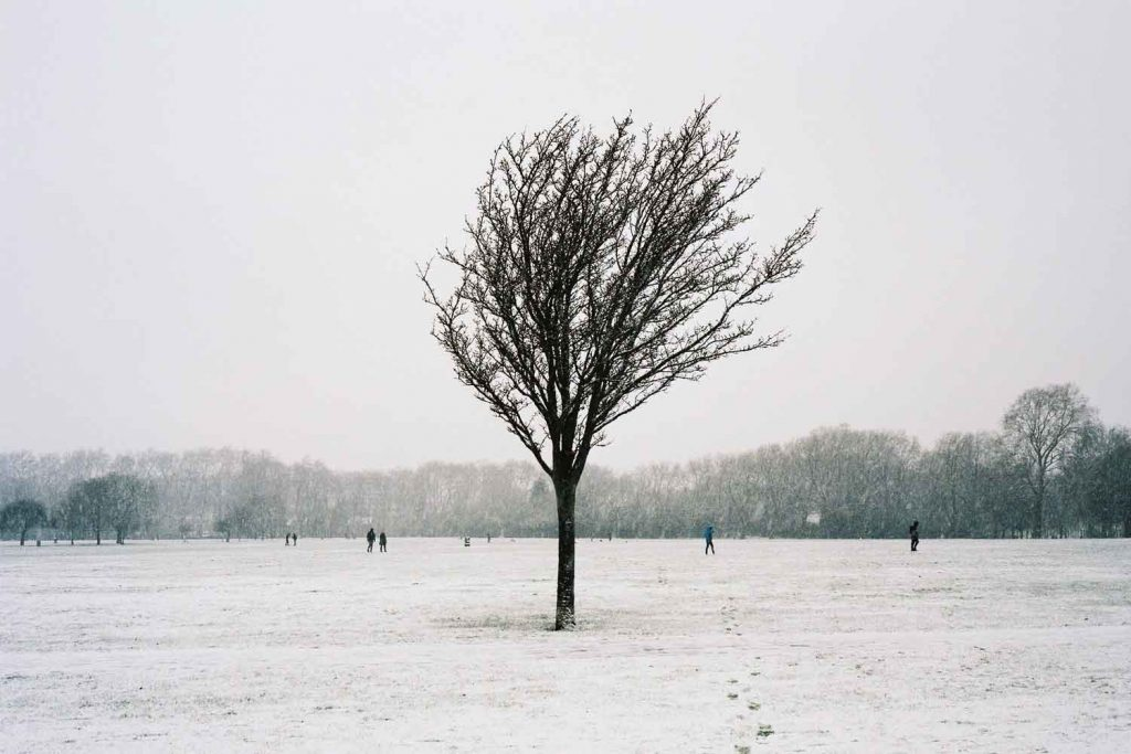 Lone tree, Victoria Park in the snow, 2021, photo by Tim Boddy