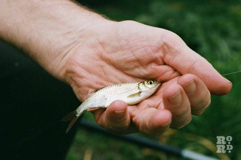 Holding a small fish, fishing in Victoria Park, East London.